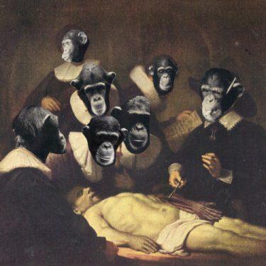 Ape-Suit _Apes_w